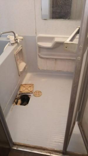 浴室カビ除去全体クリーニング