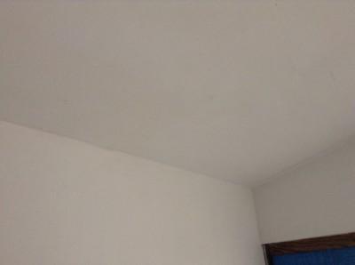 モルタル壁 カビ除去