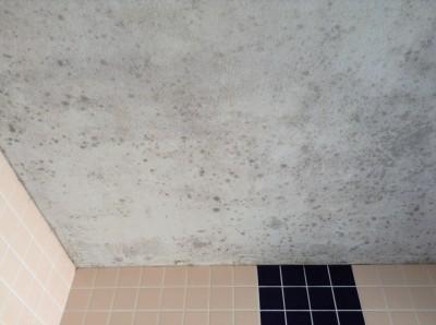 浴室 吹き付け天井 カビ除去