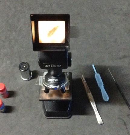 チャタテムシ 顕微鏡にて確認