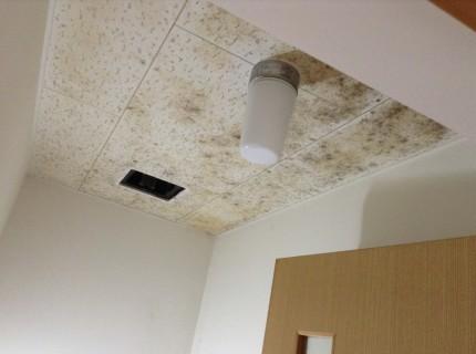 トイレ天井カビ汚れ落とし