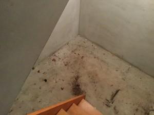 地下室のクリーニング