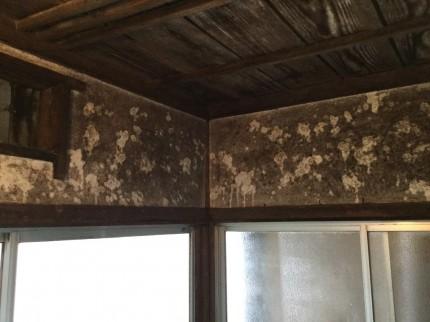 漆喰壁のカビ落とし
